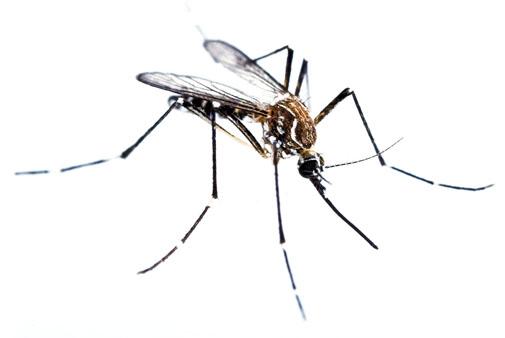 muggen-bluepestcontrol
